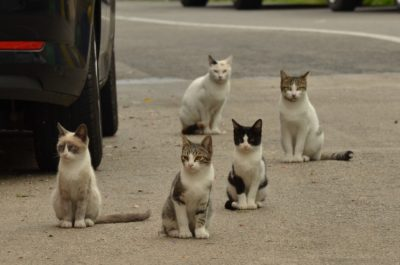 Detective de mascotas en casos de abandono de animales