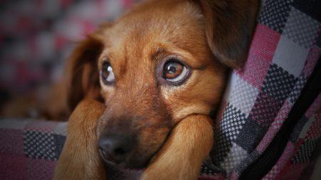 Cómo prevenir el abandono de animales