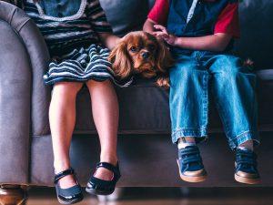 Maltrato de animales domésticos en la familia